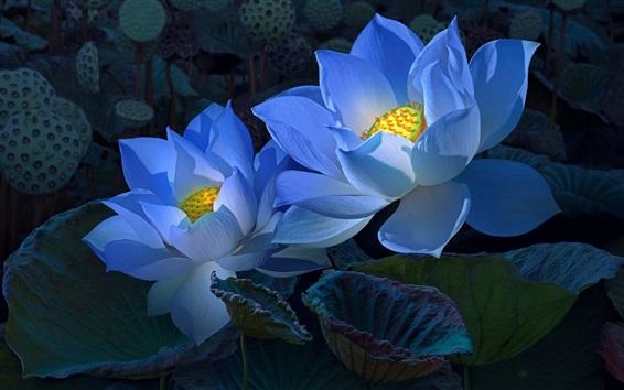 Wallpaper Blue lotus, darkness