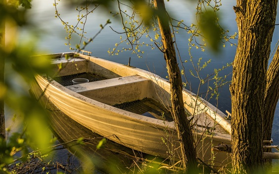 Wallpaper Boat, trees, lake