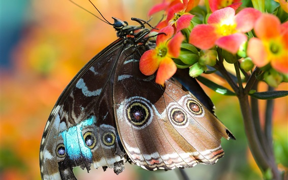 Wallpaper Butterfly, red flowers, wings, insect