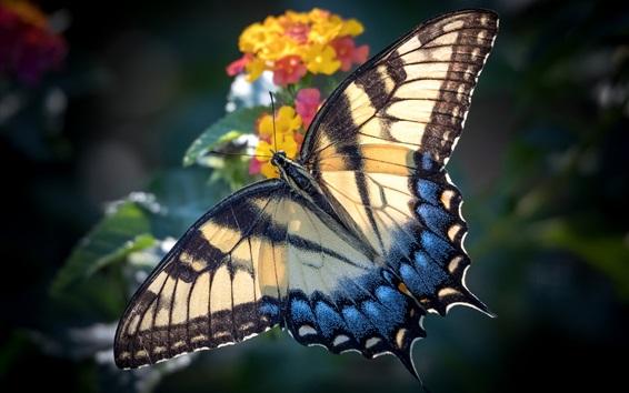 Wallpaper Butterfly, wings, flowers, blurry background