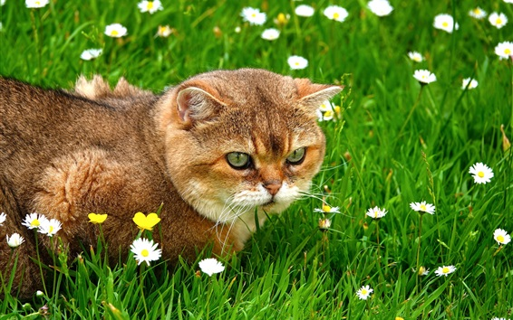 Wallpaper Cat in the grass, wildflowers
