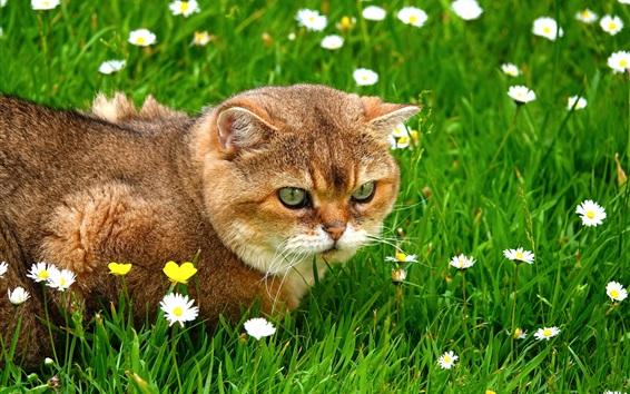 壁紙 草の中の猫、野生の花