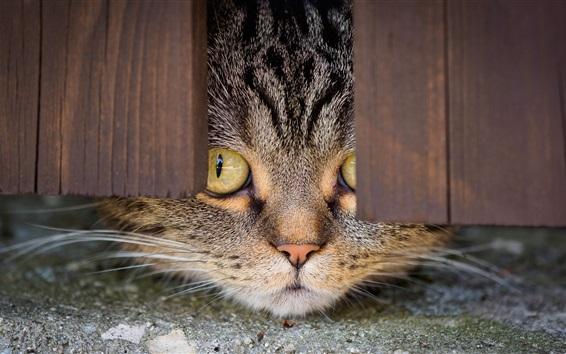 Papéis de Parede Gato, olhe, o fundo da porta