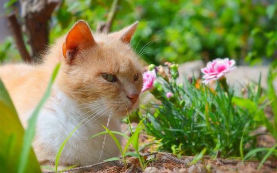 Papéis de Parede Cat rest, flores cor de rosa