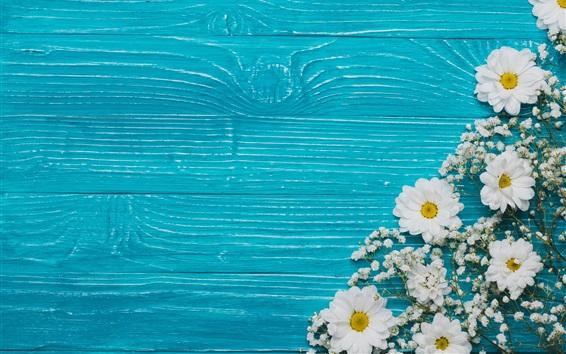 Papéis de Parede Crisântemo e flores brancas, fundo azul