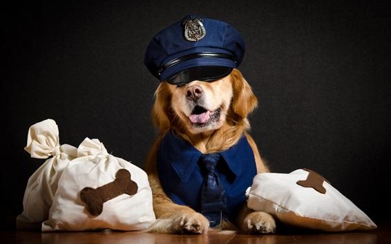 Fondos de pantalla Perro fresco, policía, animales divertidos
