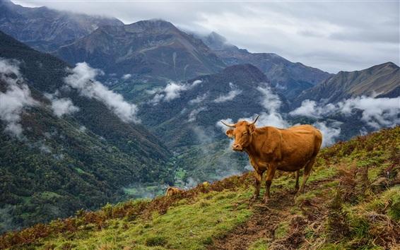 Papéis de Parede Vaca, montanhas, grama
