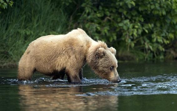 壁紙 かわいいクマの子、濡れた、水