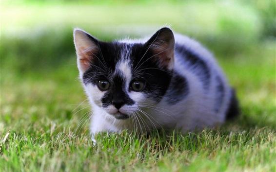 Wallpaper Cute kitten, grass