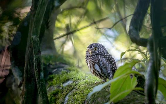 Wallpaper Cute owl, bird, trees, bokeh