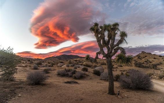 Wallpaper Desert, bushes, red clouds