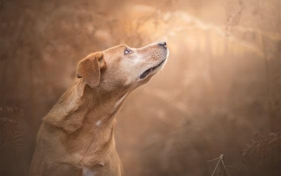 Обои Собака взглянуть сбоку, взять голову вверх