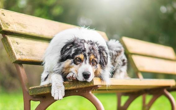Wallpaper Dog rest on bench