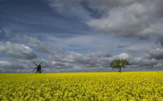 Wallpaper England, rapeseed flowers, windmill, trees