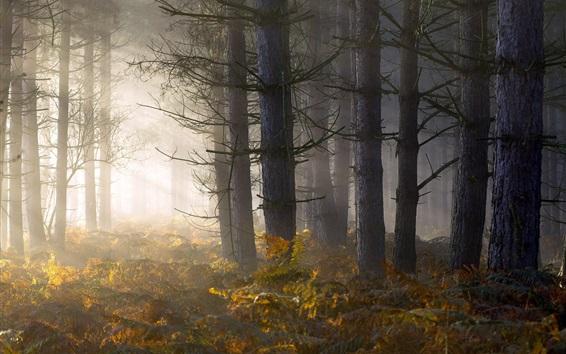 Wallpaper Forest, trees, fern, fog, morning