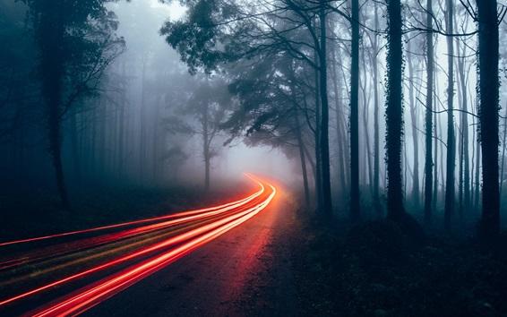 Обои Лес, деревья, светлые линии, туман