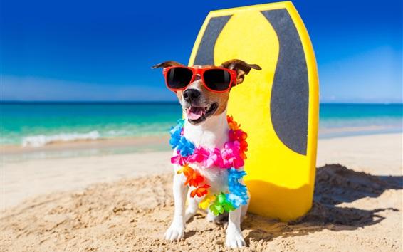 Papéis de Parede Cão engraçado, óculos de sol, praia, areias