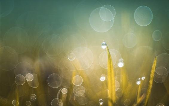 Wallpaper Grass, water drops, light circles, shine, summer