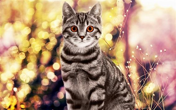 Wallpaper Gray cat, red eyes, glare, flowers