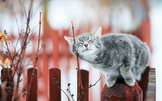 Обои Серый кот стоит на заборе