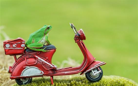 배경 화면 녹색 개구리 장난감 오토바이에 앉아