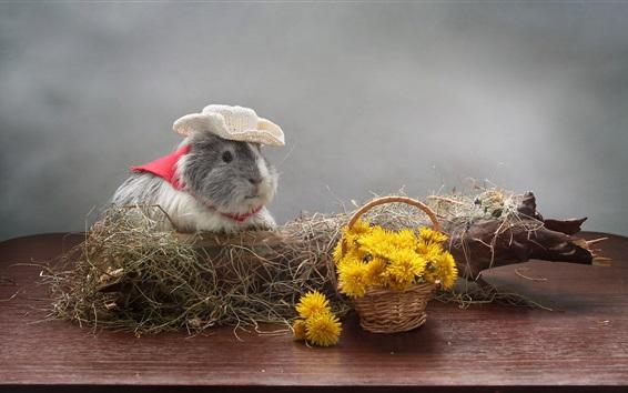 Обои Гвинейский свиньи, цветы одуванчиков, шляпа, юмор