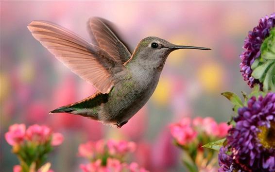 Papéis de Parede Voo de beija-flor, asas, flores cor de rosa e roxas