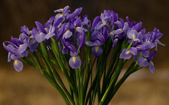 배경 화면 홍채, 자주색 꽃, 꽃다발