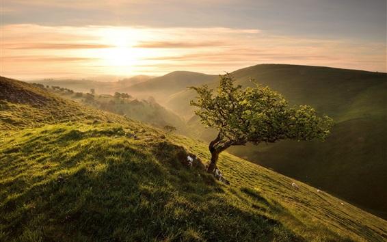 Wallpaper Morning, slope, tree, grass, green, sunrise