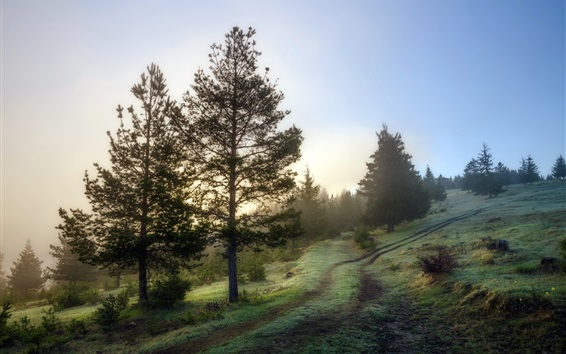 Wallpaper Morning, trees, grass, path, slope, fog