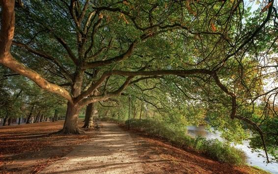 Wallpaper Park, trees, river, fence, leaves
