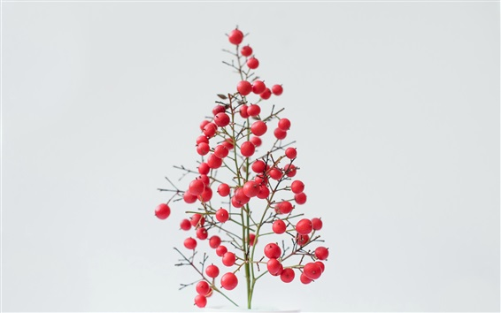 Wallpaper Red berries, white background
