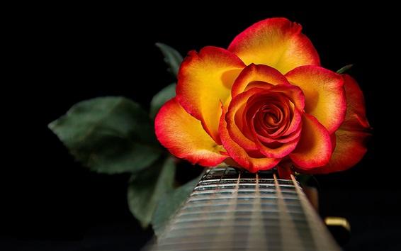 Papéis de Parede Pétalas de vermelho-laranja rosa flor, guitarra, cordas