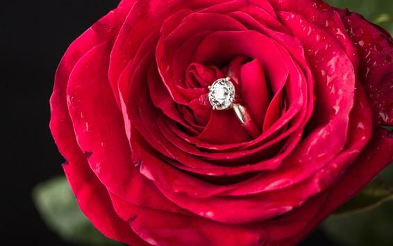 Wallpaper Red rose, diamond ring, romantic