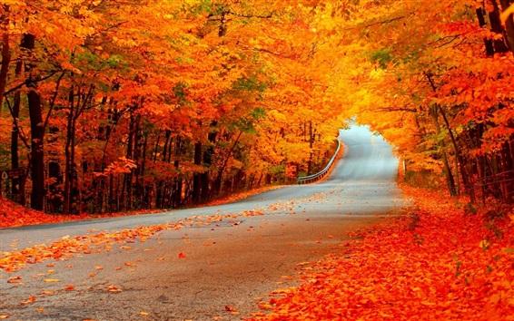 Wallpaper Road, trees, gold autumn