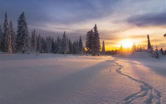 Обои Россия, зима, снег, деревья, закат