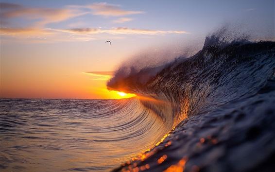 Wallpaper Sea waves, splash, bird, sunset