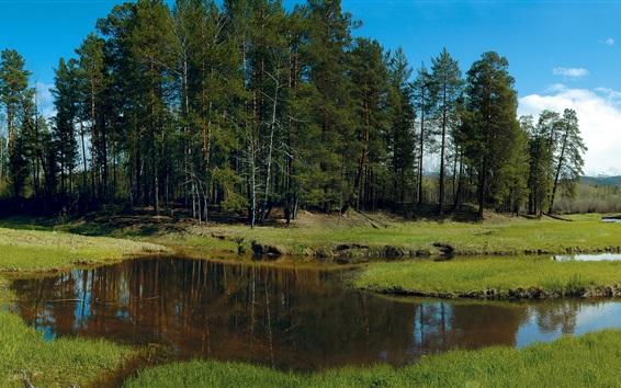 壁紙 シベリア、森林、木々、畑、草、クリーク