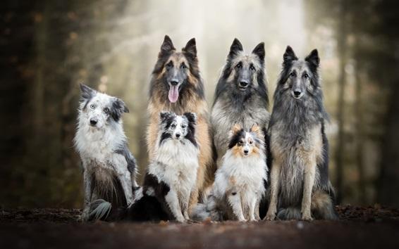 Wallpaper Six dogs, friends