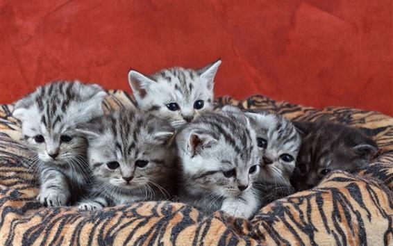 Wallpaper Six kittens, cubs