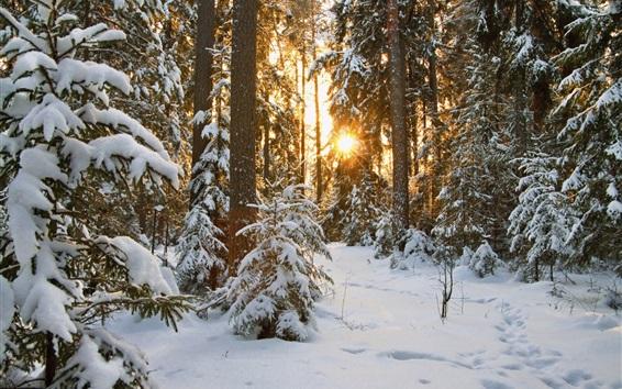 Fondos de pantalla Nieve, árboles, sol, invierno