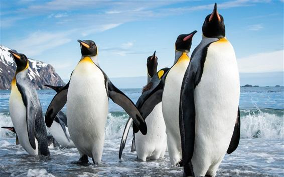 Wallpaper Some penguins, sea, waves