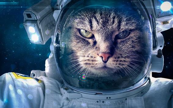 Wallpaper Space suit, cat astronaut, creative picture