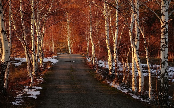 Papéis de Parede Spruce, floresta, estrada, neve, inverno