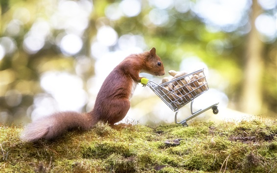 Wallpaper Squirrel, peanut, shopping cart, funny animal
