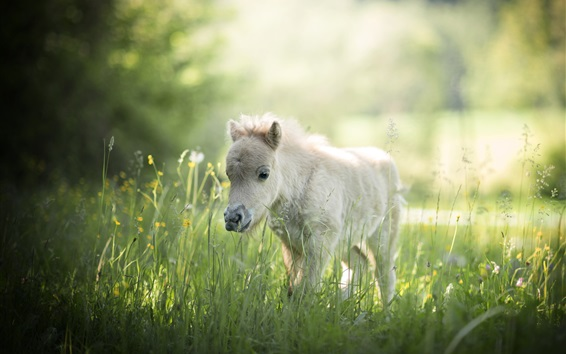 Wallpaper Summer, grass, horse