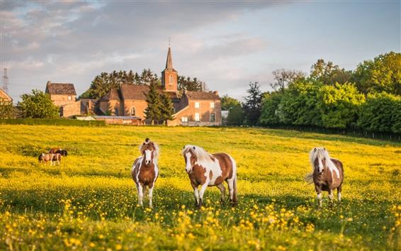 Wallpaper Summer, grazing, meadow, three horses, yellow flowers