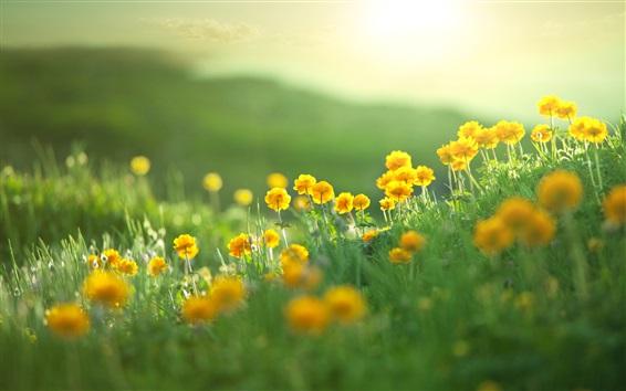 Fondos de pantalla Verano, flores amarillas, hierba verde, bokeh