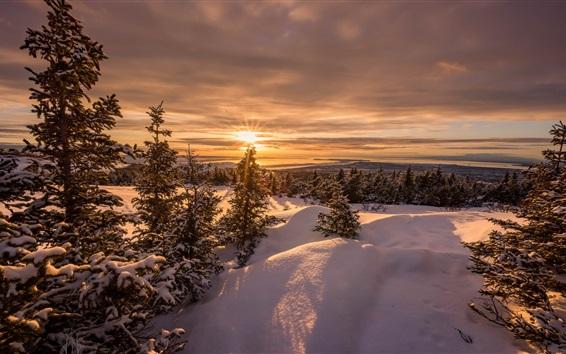 Papéis de Parede Pôr do sol, árvores, neve, inverno