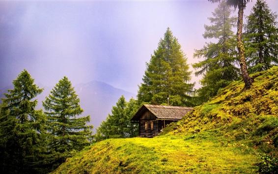 Wallpaper Trees, grass, mountains, house, summer
